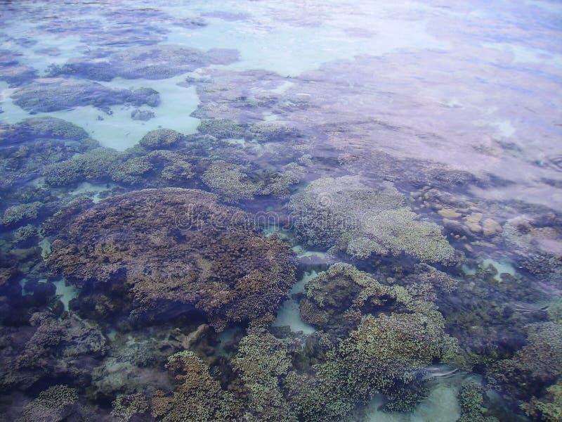 Coral Reef photos stock