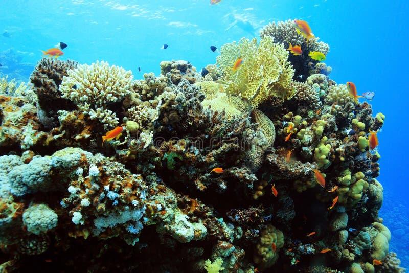 Coral Reef imágenes de archivo libres de regalías