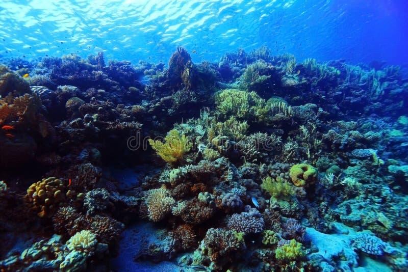 Coral Reef foto de archivo