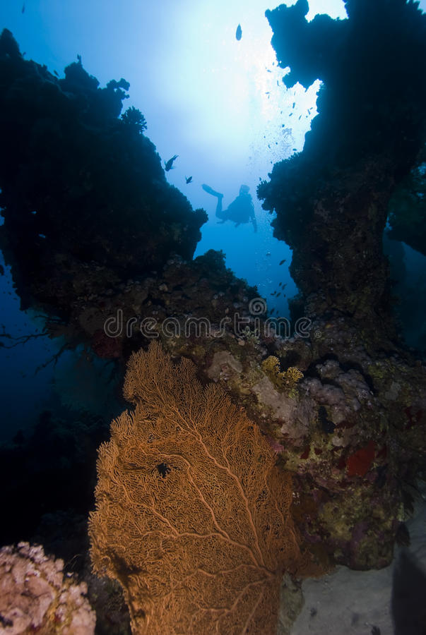Free Coral Reef And Divers. Stock Photography - 12449842