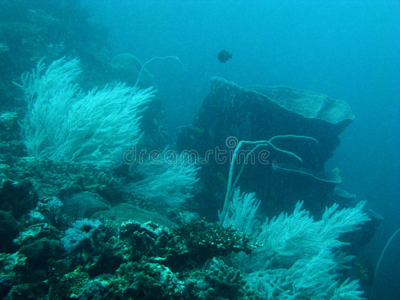 Coral reef in the Andaman Sea. royalty free stock photos