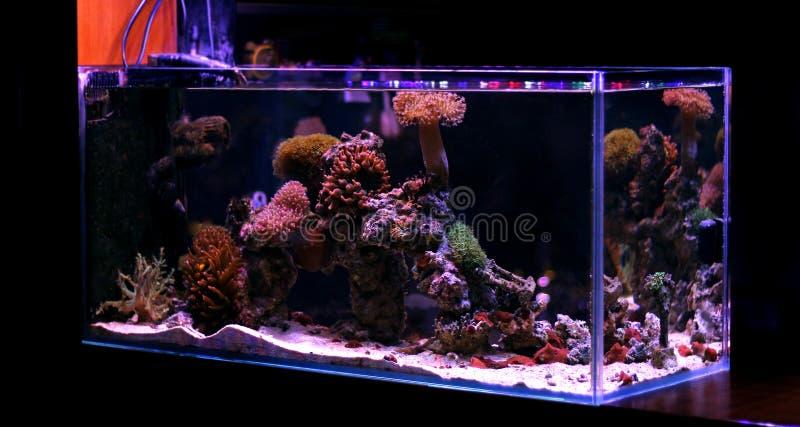 Coral Reef Aquarium Tank Scene royaltyfria foton
