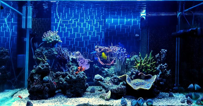 Coral Reef Aquarium Tank Scene royaltyfri bild
