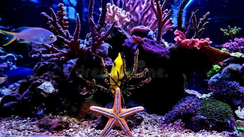 Coral Reef Aquarium Tank Scene fotografering för bildbyråer