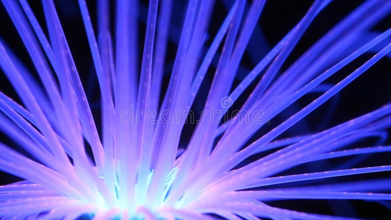 Coral Reef blu d'ardore immagini stock