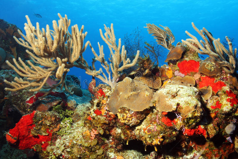 Download Coral Reef stock photo. Image of underwater, cozumel - 34228186
