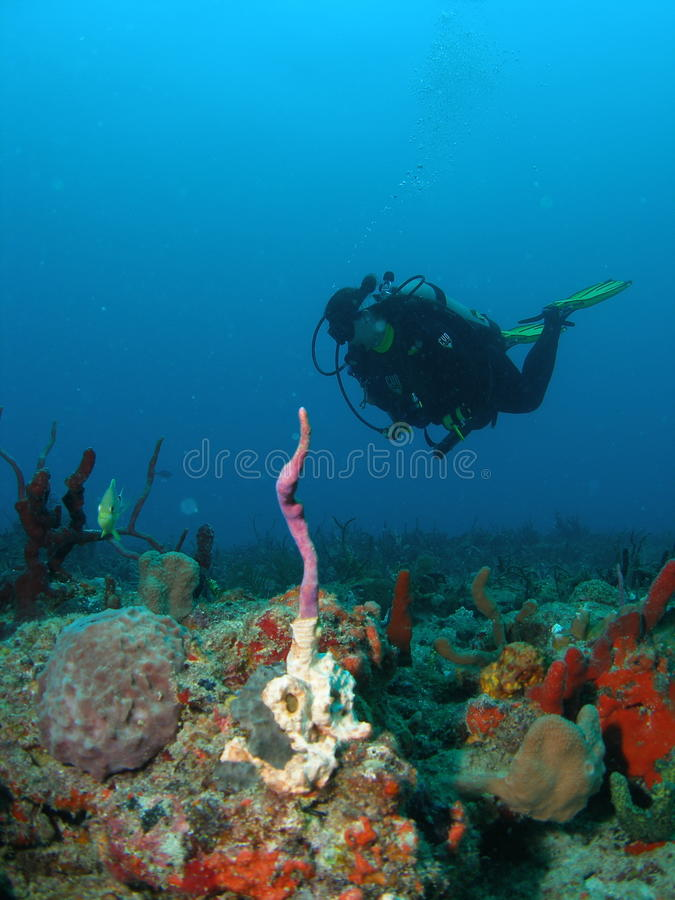 Coral Reef and a Diver royalty free stock photo