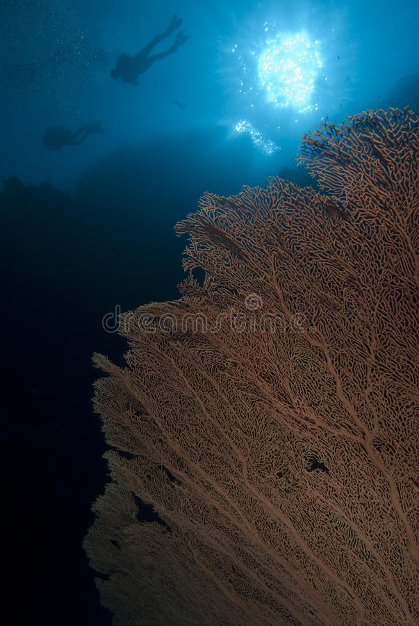 Download Coral reef and divers. stock image. Image of travel, reef - 12451209