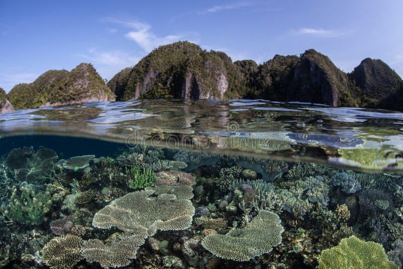 Coral Reef Diversity royaltyfri foto