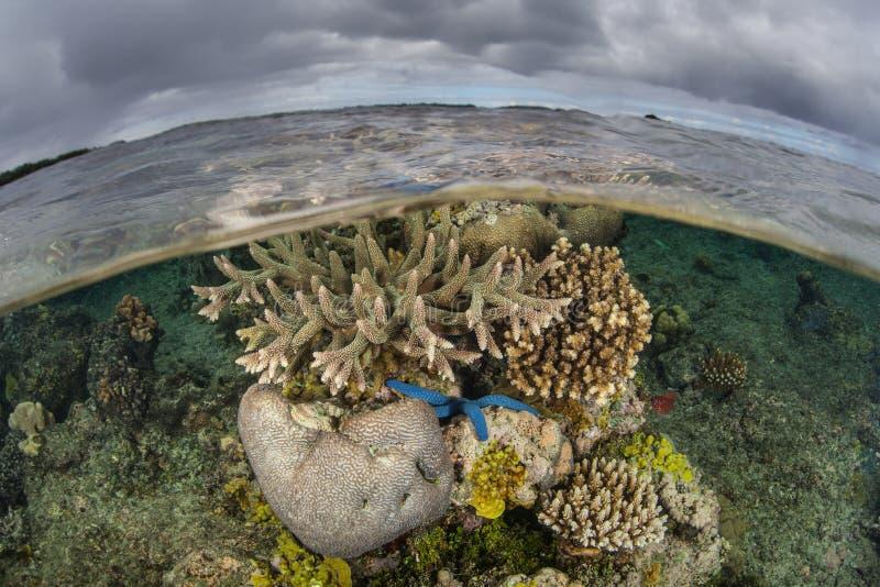Coral Reef e nuvens rasas 2 imagens de stock royalty free