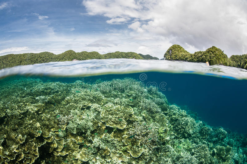 Coral Reef ed isole basse fotografie stock libere da diritti