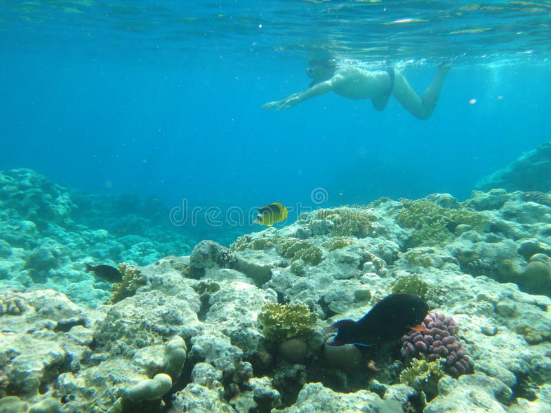 Coral reef in Egypt 4 royalty free stock image