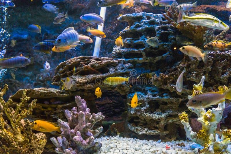 Coral Reef en Tropische Vissen in Zonlicht royalty-vrije stock afbeeldingen