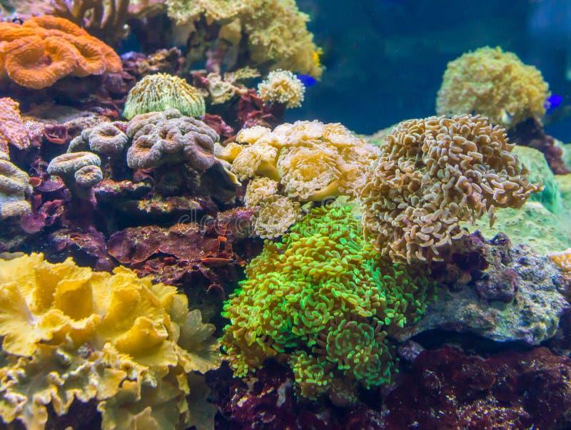 Coral Reef en Tropische Vissen in Zonlicht Het aquarium van Singapore stock foto's