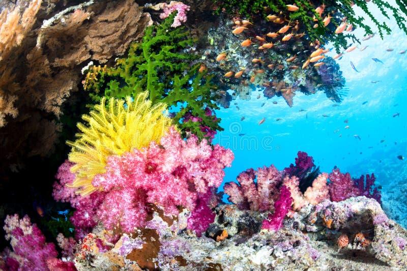 Coral Reef exótica imagens de stock