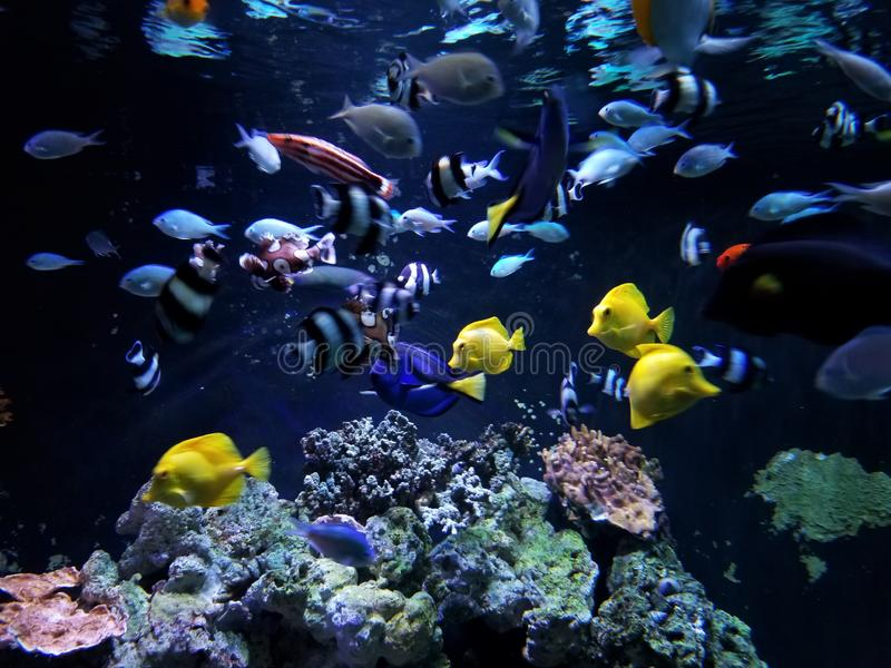 Coral Reef Feeding Frenzy subacquea immagini stock libere da diritti