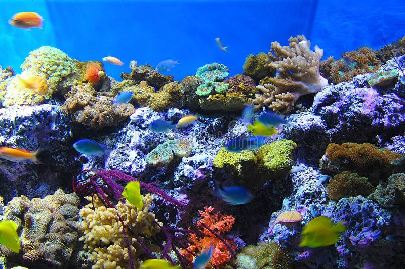 Coral reef and fish. Beautiful coral and colorful fish
