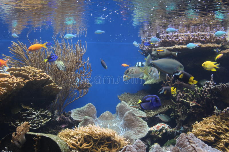 Coral reef fish in aquarium. Beautiful colorful fish on coral reef royalty free stock images