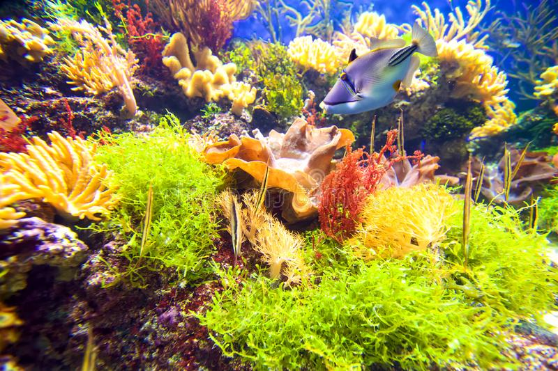 Coral reef with fish. Colorful underwater coral reef with fish stock photo