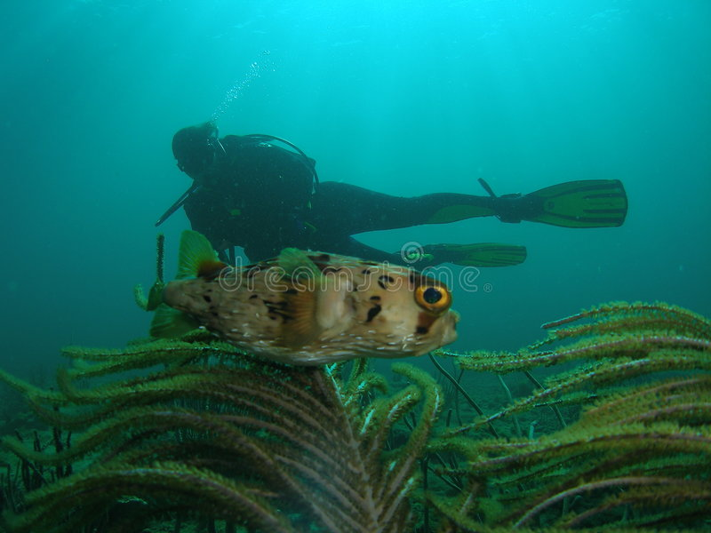Coral Reef, Fish and Diver stock photography
