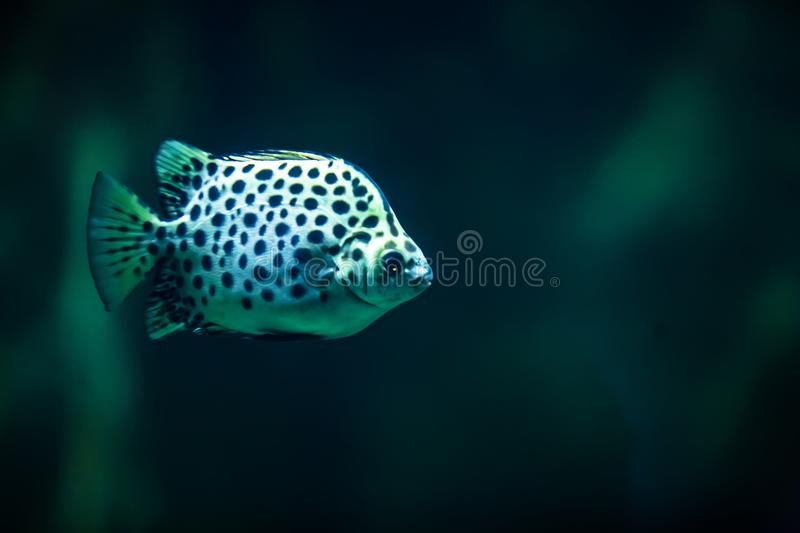 Coral reef fish. Tropical fish. stock image