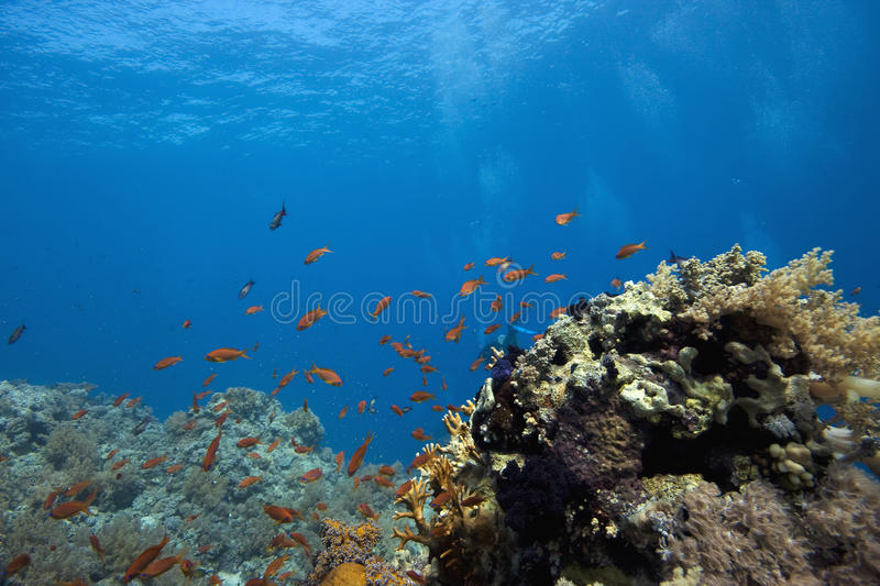 Coral reef with fish stock images