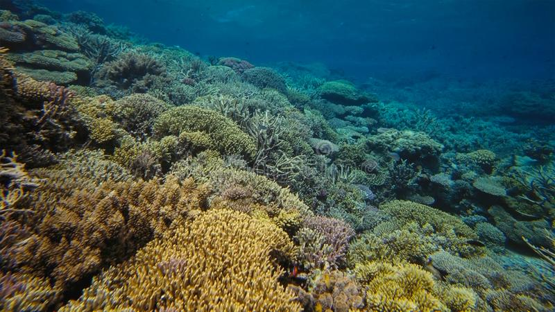 Coral reef, Great barrier reef, Australia. Underwater landscape. Marine life concept stock photo