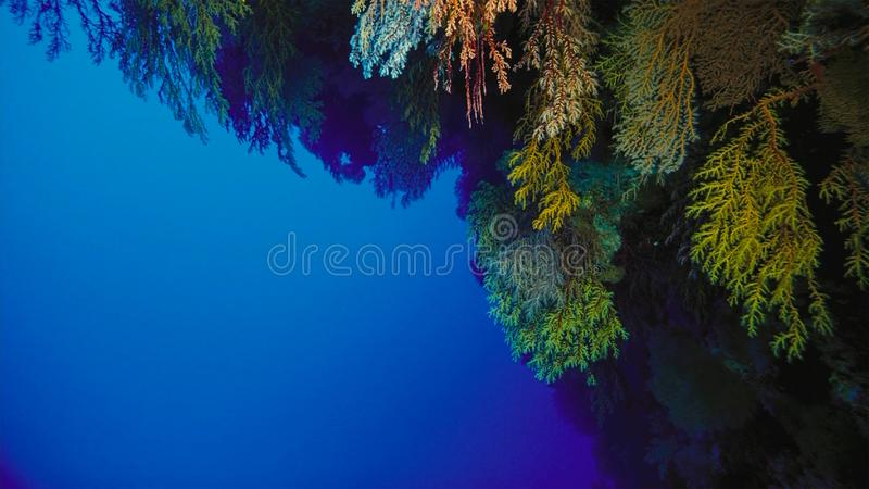 Coral reef, Great barrier reef, Australia. Underwater landscape. Marine life concept stock photography