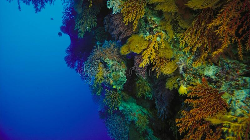 Coral reef, Great barrier reef, Australia. Underwater landscape. Marine life concept royalty free stock photo