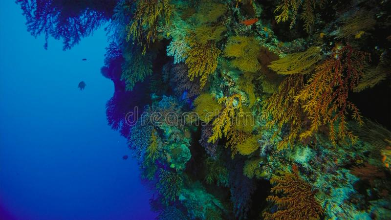 Coral reef, Great barrier reef, Australia. Underwater landscape. Marine life concept royalty free stock images