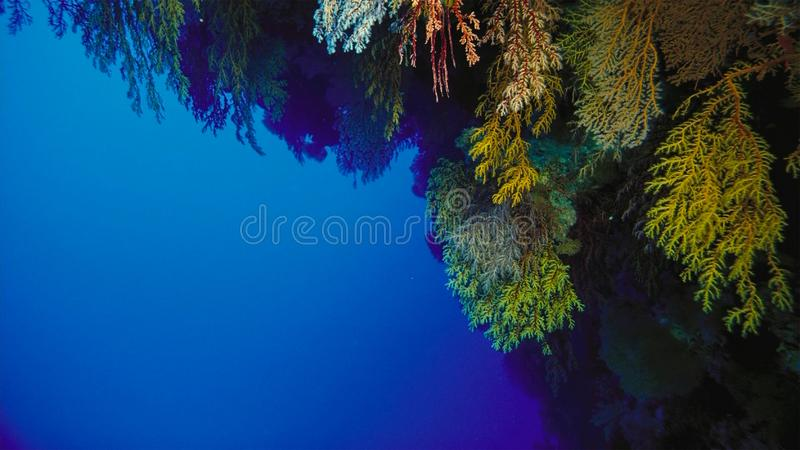 Coral reef, Great barrier reef, Australia. Underwater landscape. Marine life concept stock images