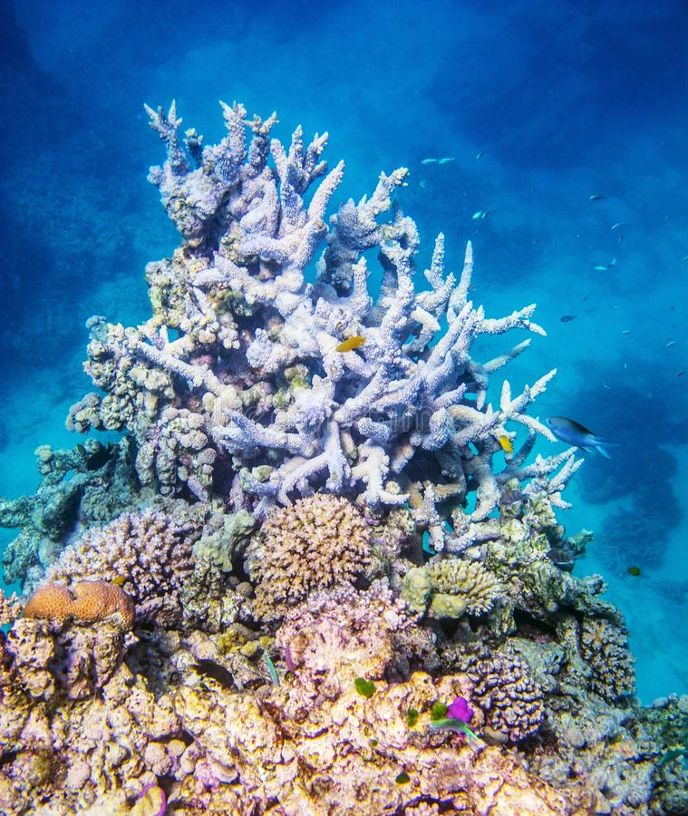 Coral reef on Great Barrier Reef royalty free stock images