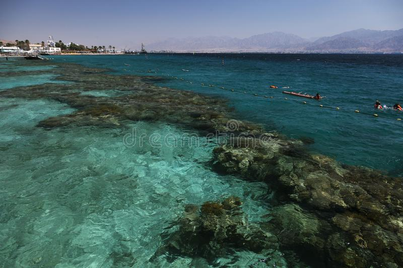 Coral reef in the Gulf of Eilat. Israel, Red Sea royalty free stock images