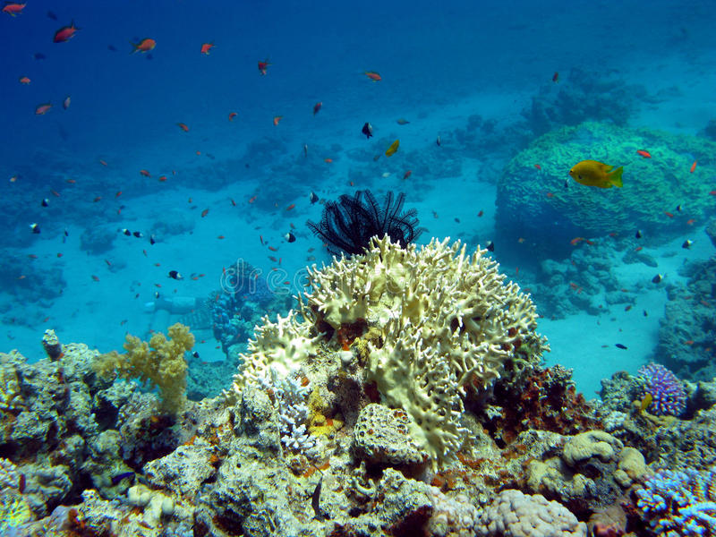Download Coral Reef With Hard And Soft Corals Stock Image - Image: 21352829