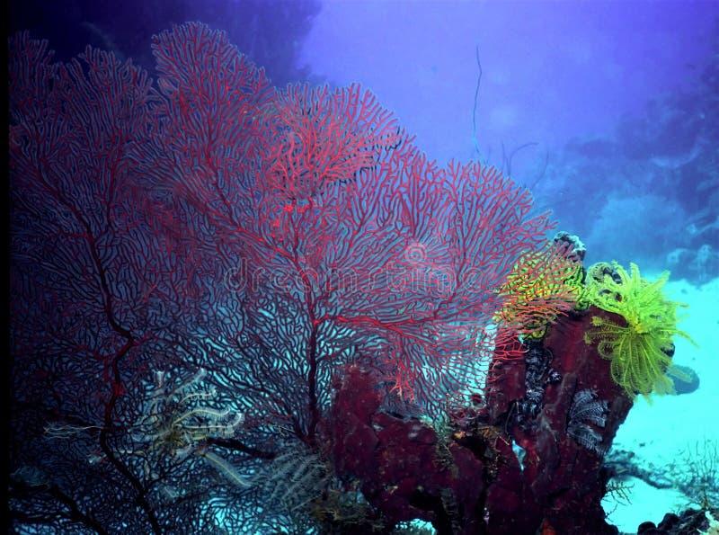 Coral Reef i den Kimbe fjärden, PNG royaltyfri foto