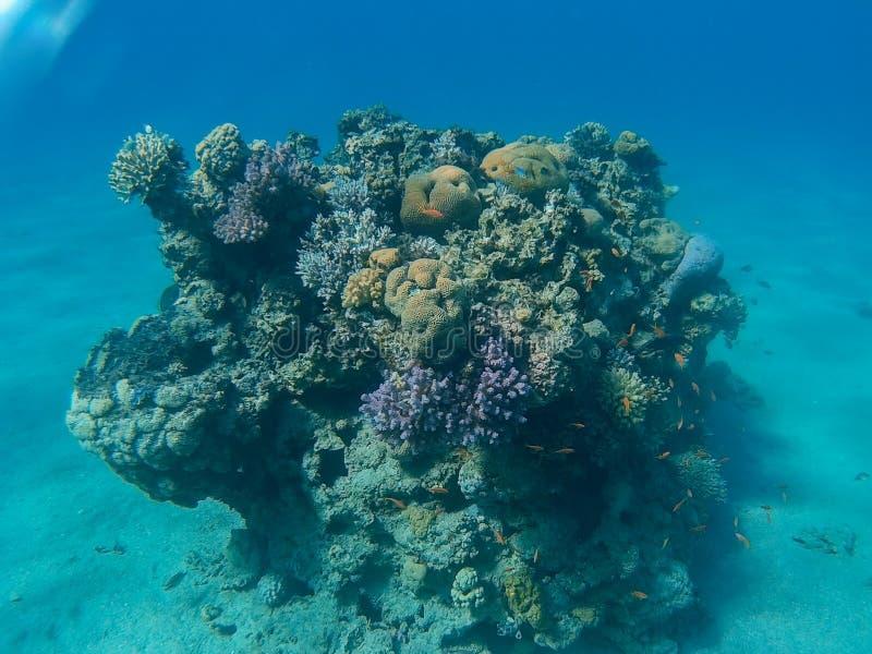 Coral Reef i Eilat royaltyfri fotografi