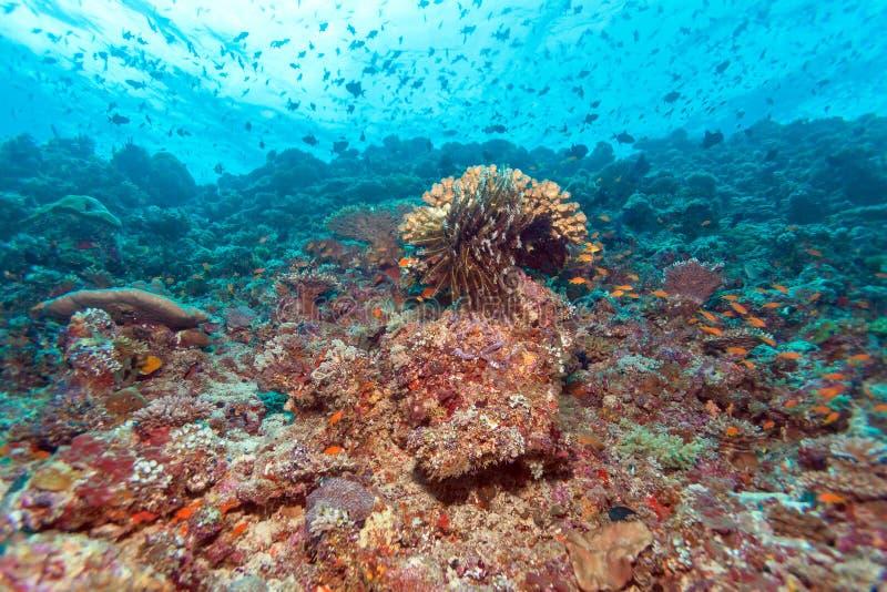 Download Coral Reef Landscape Tropicale Colorée Photo stock - Image du nature, indien: 77158500