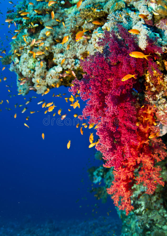 Coral Reef Life stock fotografie