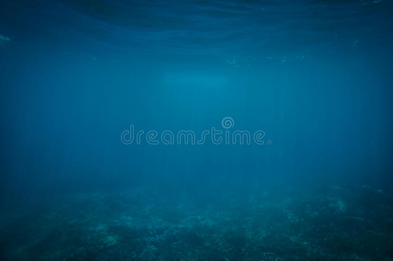 Coral Reef In Light Blue Sea Free Public Domain Cc0 Image