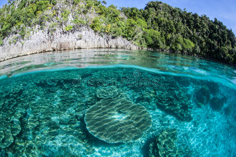 Coral Reef and Limestone Island royalty free stock photos