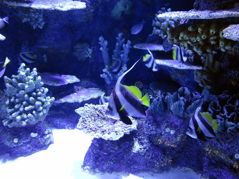 Coral reef marine life colorful tropical fish aquarium tank royalty free stock images