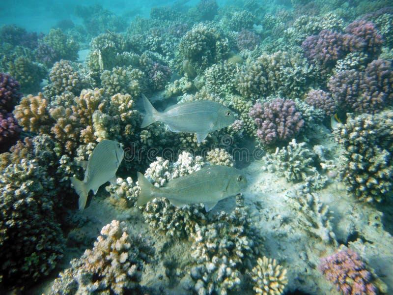 Coral Reef med varelser royaltyfri foto