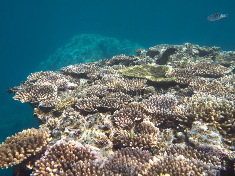Coral Reef nahe Barasu-Insel nördlich Iriomote-Insel, Okinawa lizenzfreies stockfoto