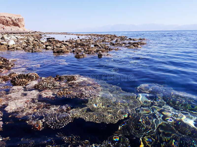 Coral reef near the shore of the red sea. Coral reef near shore red sea blue sun reflection horizon water bluewater stock photography