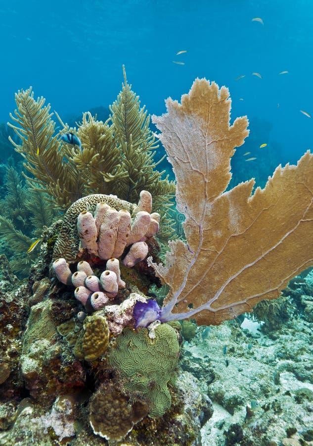 Download Coral reef off Roatan stock image. Image of america, reef - 25286851