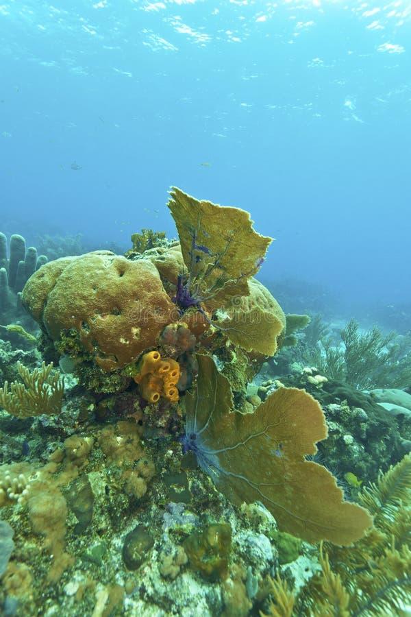 Coral Reef Off Roatan Royalty Free Stock Photos