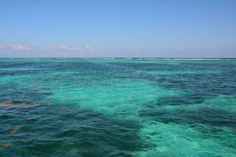 Coral Reef op Caye-Breeuwijzereiland Belize royalty-vrije stock afbeeldingen
