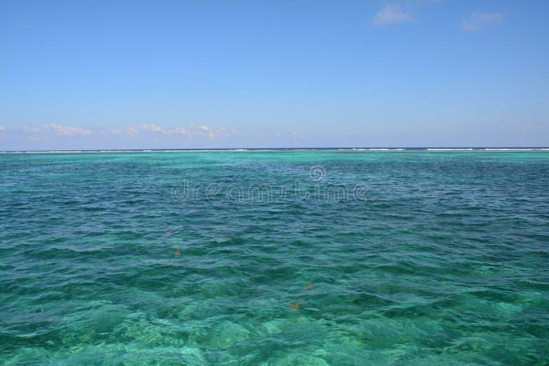 Coral Reef op Caye-Breeuwijzereiland Belize stock foto's