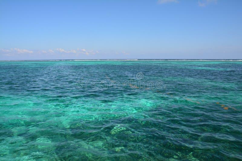 Coral Reef op Caye-Breeuwijzereiland Belize royalty-vrije stock foto