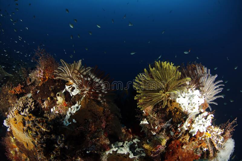 Coral Reef in Raja Ampat royalty free stock image